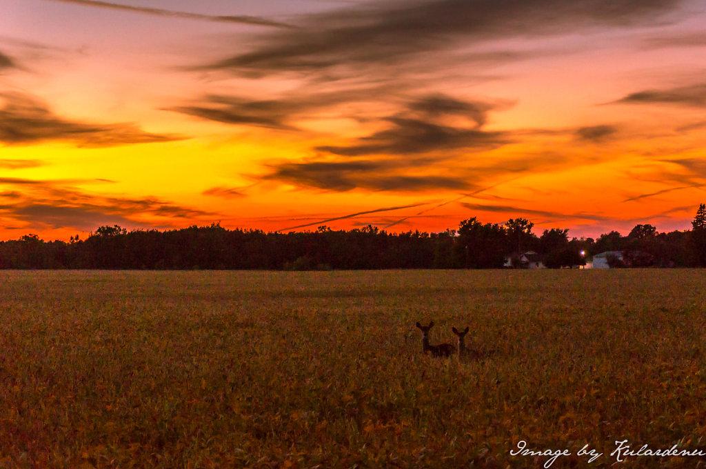 Deer-sunset2.jpg